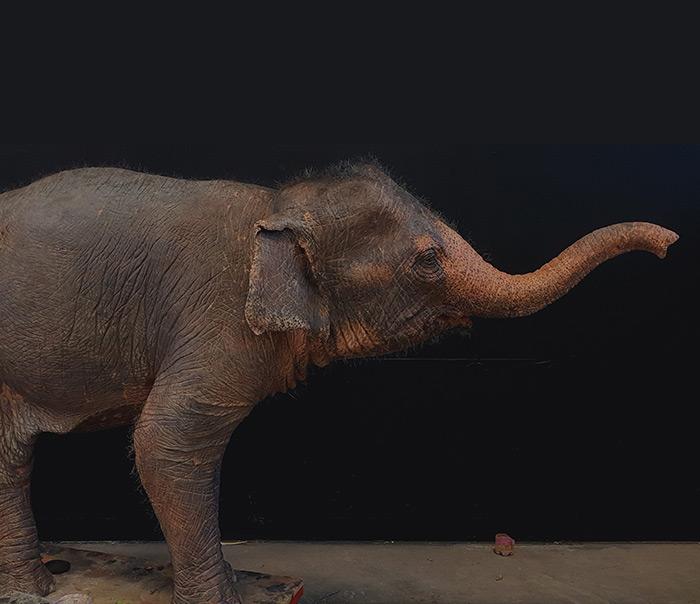 Elefante in polistirolo