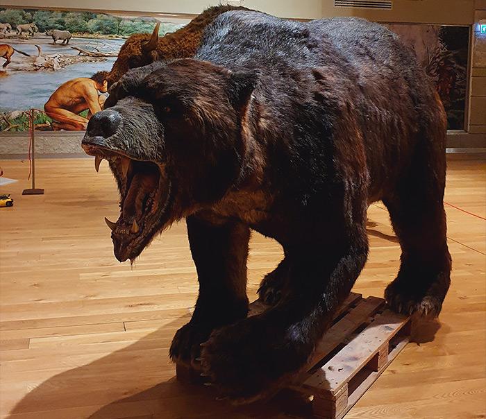 Grizzly realizzato per Di.Ma srls
