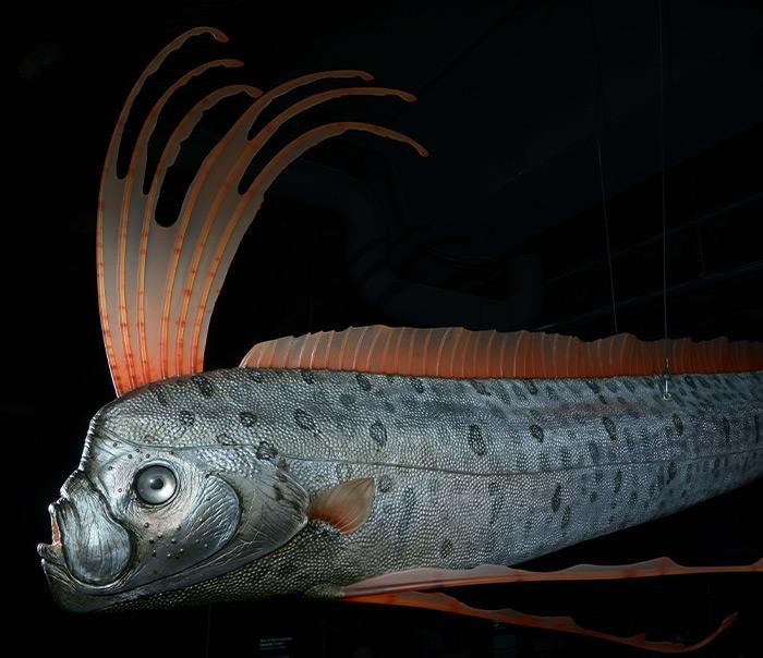 Pesce realizzato in polistirolo